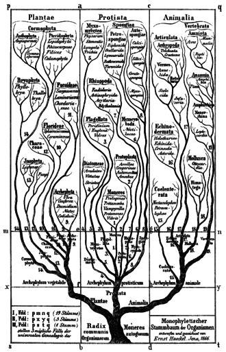 BIODIVERSIDAD: La idea del Ancestro común