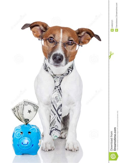 puppy bank with piggy bank stock image image 24653121