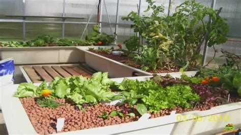 Aquaponics Backyard by Home Aquaponics Considerations For Backyard Aquaponics