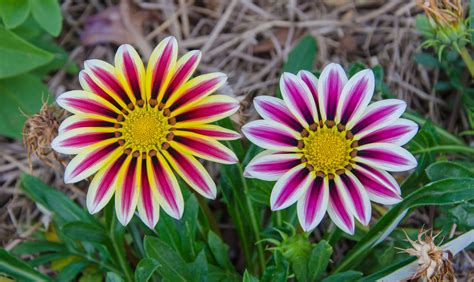 The Flower 10 most beautiful flowers in the world flower meaning
