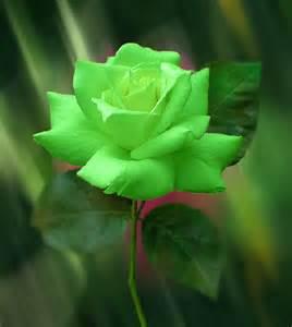 true green roses artline feel the creation