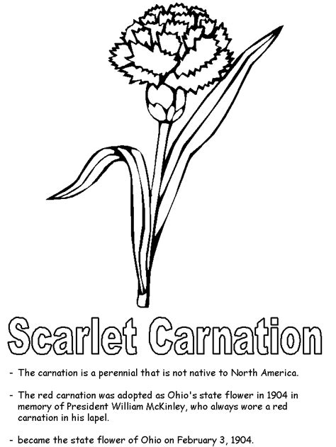 scarlet carnation coloring page