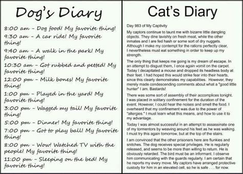 dog s diary vs cat s diary s