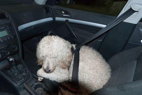 Hundesicherung Im Auto by Der Hund Im Auto Seite 9 220 Berlegungen Vor Dem Kauf
