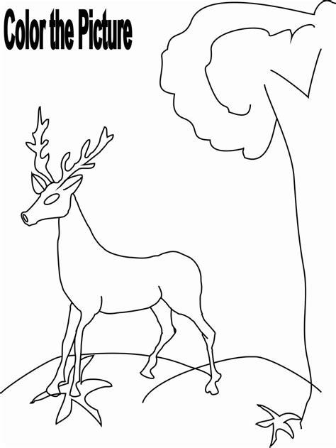 herbivorous animals coloring page 92 herbivorous animals coloring page iguana picture