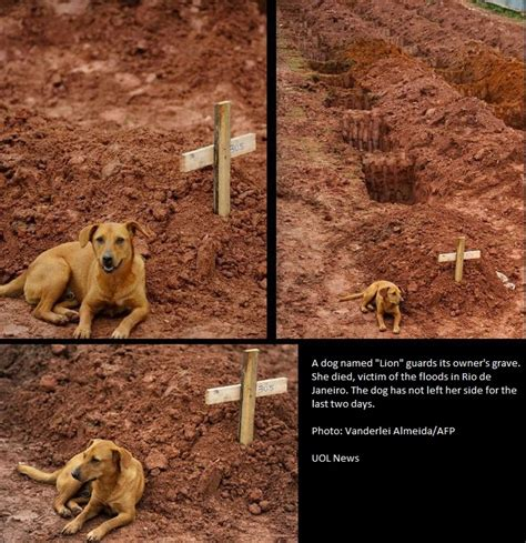 loyal puppy lays beside owner s grave for days pics