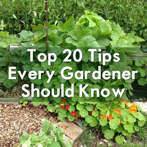 garden tips top 20 tips every gardener should