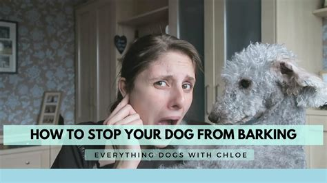 how i stopped my dog from barking at the tv puppy leaks how to stop my dog from barking at everything how to