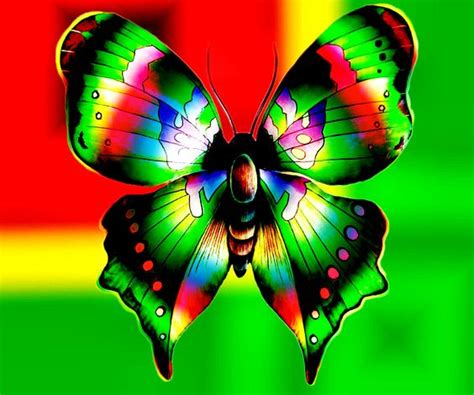 colorful butterfly colorful butterflies colorful butterfly abstract design