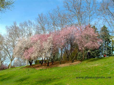 imagenes de flores y arboles 193 rboles con flores plantas jard 237 n