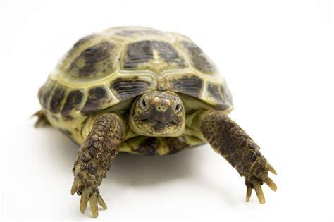 letargo tartarughe terrestri giardino giornata informativa su rettili e tartarughe garden