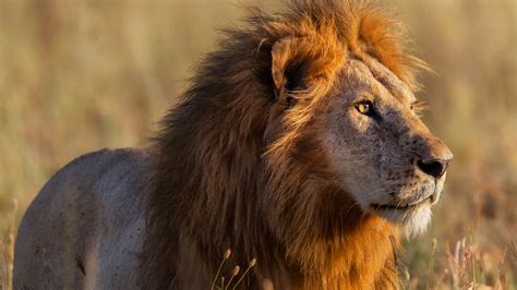 Of Lions pictures