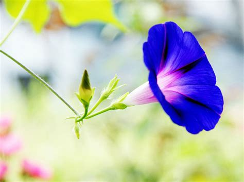 wallpaper flower morning wallpapers photography wallpapers free