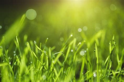mower height affects lawn health