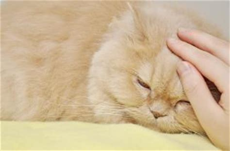 how to make a cat comfortable when dying what is the dying behavior of cats lovetoknow