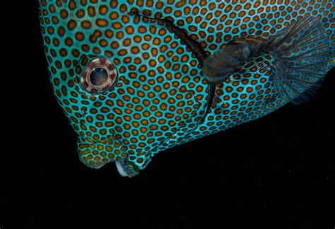 colorful fish why are reef fish so colorful the science the