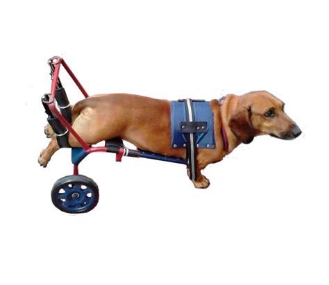 silla ruedas para perros silla de ruedas para perros gatos andadera 1 500 00 en