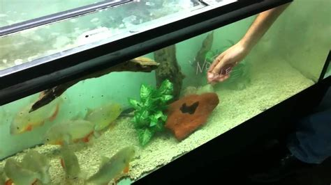 aquascape online pedro from www aquascapeonline com putting my arm in a