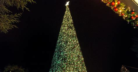 real christmas trees liverpool europe s largest walk in tree is coming to cheshire oaks liverpool echo
