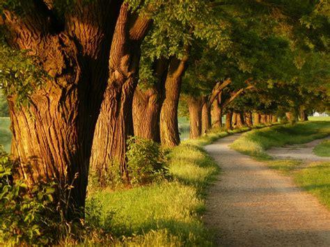 imagenes hd bosques otra foto hd de bosques fondos de paisajes
