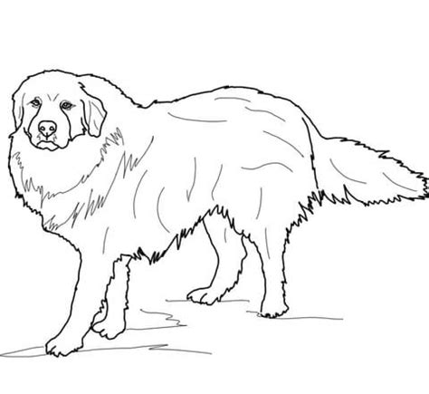 coloring pages of breeds wire fox terrier coloring page coloring breeds