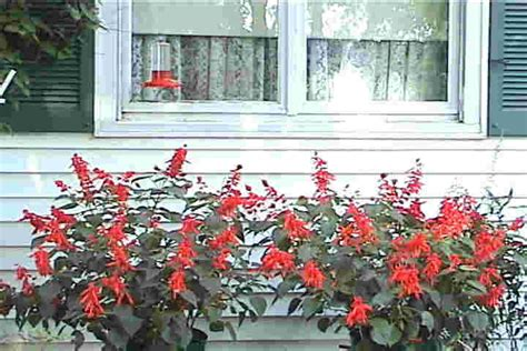 attracting hummingbirds how to enjoy hummingbirds