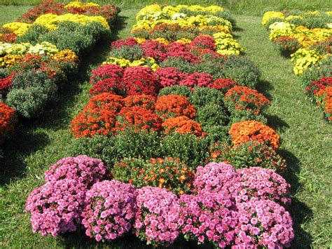 how much are mums 28 images barrister bride the bee flower overload flower photography
