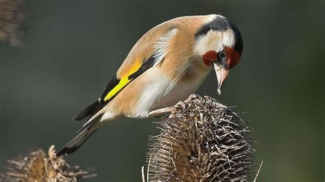 the rspb birds wildlife when to feed wild birds
