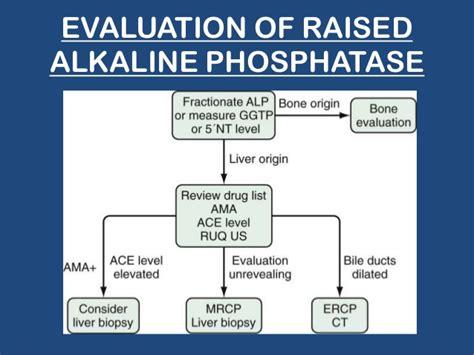 alkaline phosphatase high in dogs elevated alkaline phosphatase image mag