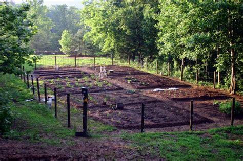 trellis vegetable garden vegetable garden design diy bean trellis gardenista