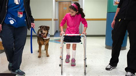 physical therapy for dogs dogs with special needs help heal in physical therapy today