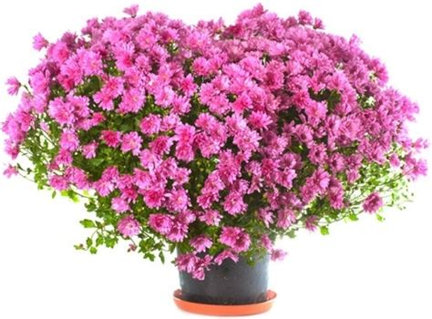 flowers photos flower images free stock photos 11 118 free