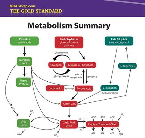 carbohydrates mcat mcat biochemistry review summary gold standard mcat prep