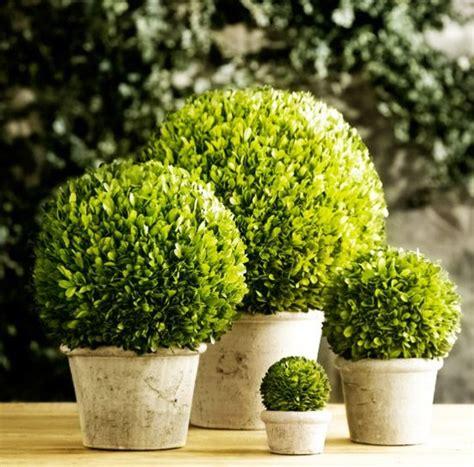 low maintenance house plants popsugar home