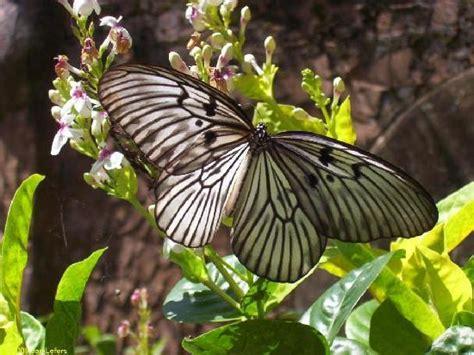 Mukena Bali Butterfly 2 bali tour program