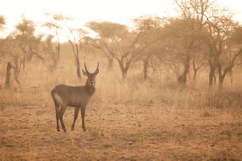 serengeti wildlife tanzania