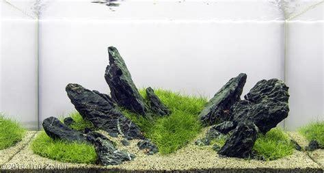 design batu aquascape 120 best images about large planted tanks on pinterest