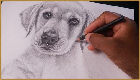 imagenes a lapiz de perritos dibujos de perros a lapiz faciles archivos imagenes de