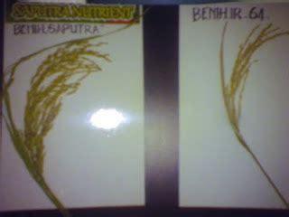 Benih Kacang Panjang Berkualitas benih padi unggul potensi 20 ton gkp per hektar