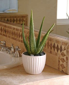 indoor plants bathroom best plants for bathroom 1 indoor plants pinterest