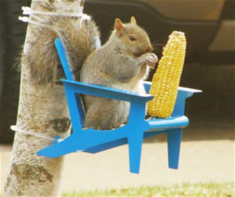 Squirrel Feeder Chair by Duncraft Adirondack Chair Squirrel Feeder
