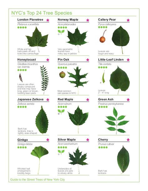 leaf version for what is a guide to biology books 2015 tree guide evergreen version 150325
