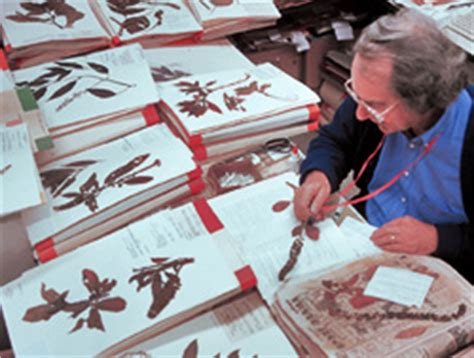 Plant Taxonomy Research Papers by Plant Classification And Systematics