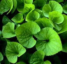 Foliage Of Plants - leaves jameswoodward s weblog
