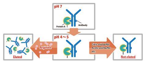 Nacalai USA, Inc. | Product | Arg-Antibody Elution Buffer ... L Arginine Results