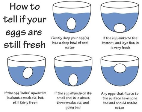 good bad egg test food tips charts etiquette how to tell if eggs are fresh good to know food to tell awesome and the egg