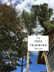 Tree Trimming Ideas How To Trim And Prune Trees Diy Basics Safety Tips