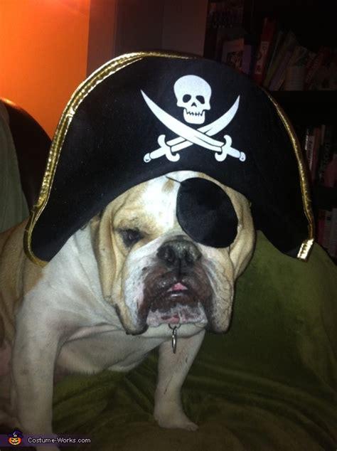 pirate british bulldog costume diy costumes