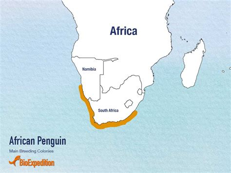 where do penguins live map penguin penguin facts and information