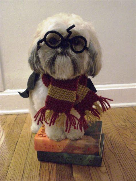 Harry Potter Dog | tucker bojangles harry potter dog
